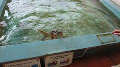 海産センター・ウミガメ
