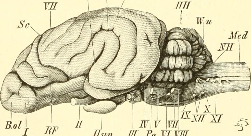 Beste Kleinhimbrückenwinkel Anatomie Fotos - Anatomie Ideen ...