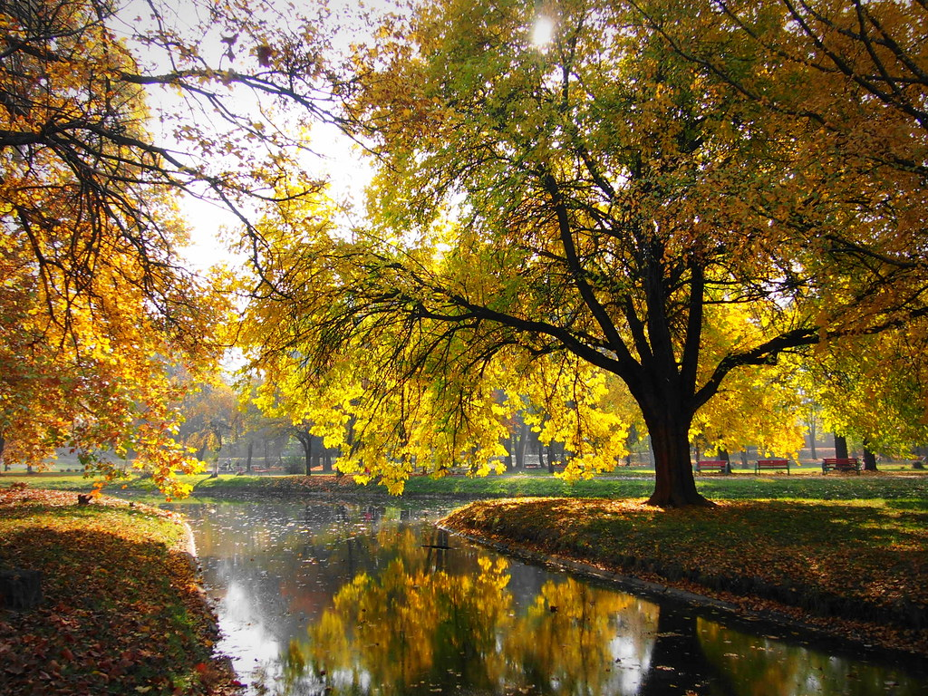 Autumn City 1152X864 Wallpapers