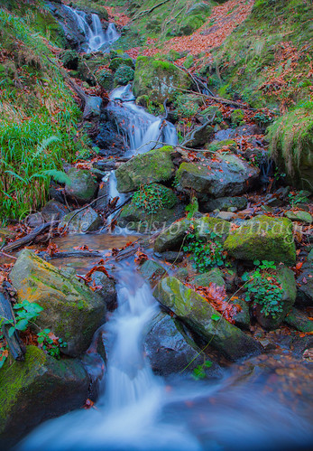 Parque Natural de Gorbeia   #DePaseoConLarri #Flickr      -2781