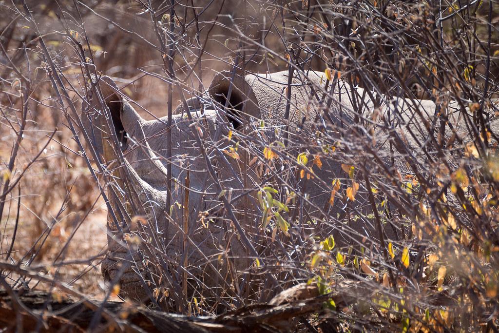 Auf Nashornpirsch