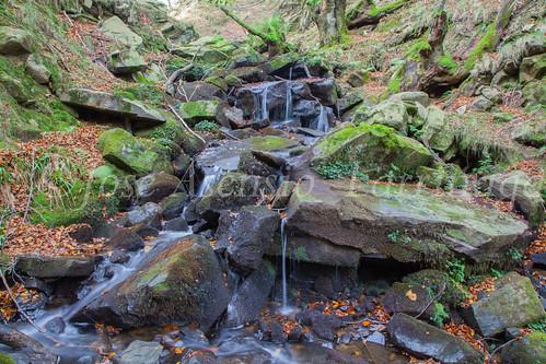 Parque Natural de #Gorbeia #DePaseoConLarri #Flickr      -1467