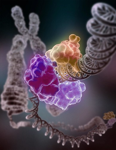 Enzyme repairing DNA | by National Institutes of Health (NIH)