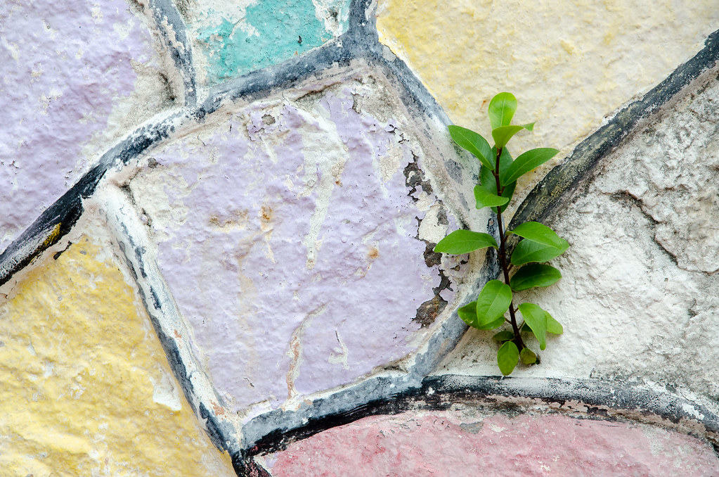Melaka' colorful wall with a small plant growing.