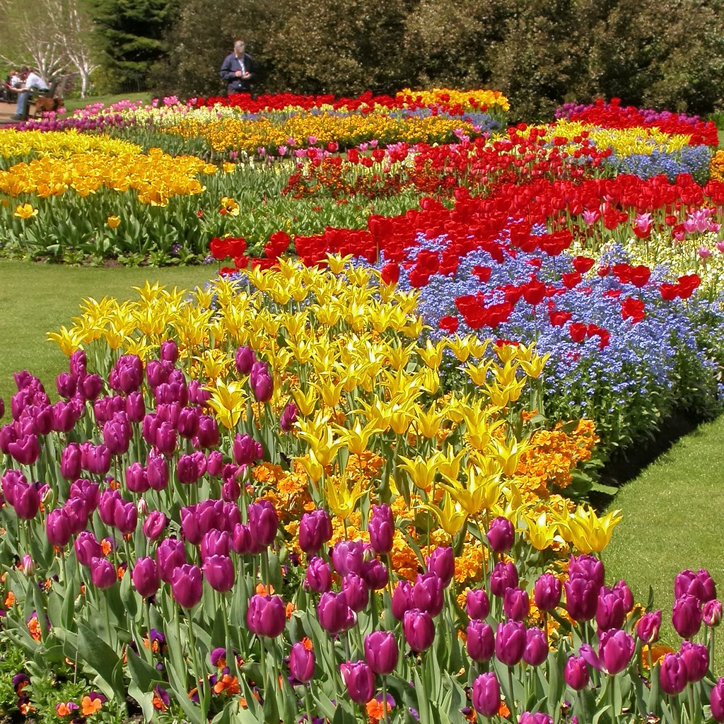 Springtime Flowers In Hyde Park London Dscn5270 Ap Q90 Edk7