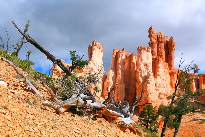 IMG_5308 Fairyland Trail, Bryce Canyon National Park