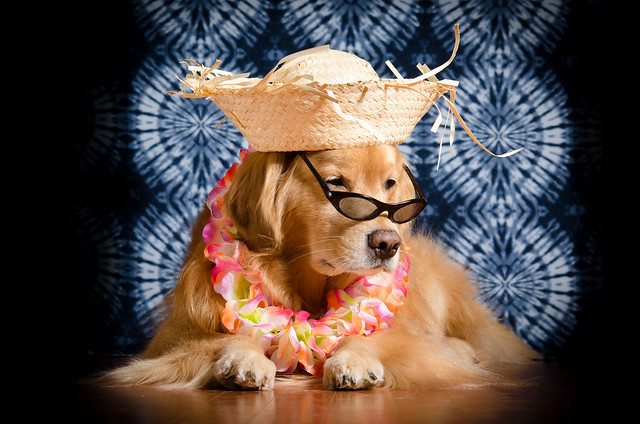 Dog in a Beach Hat