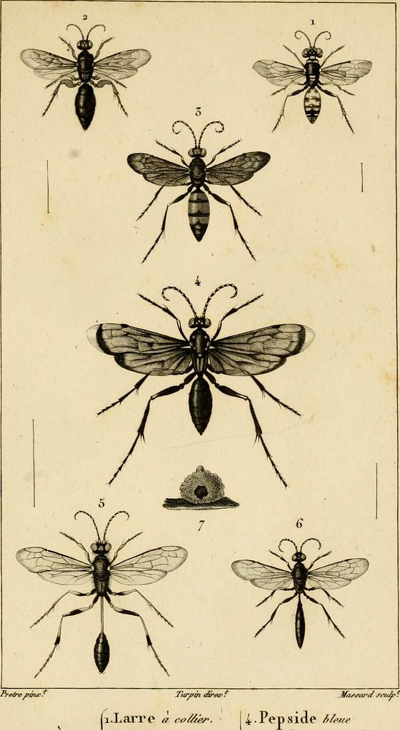 Image From Page 352 Of Considérations Générales Sur La Cl