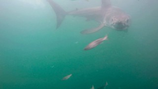 Gansbaai South Africa Great White Shark Cage Dive | by Daniel Gillaspia