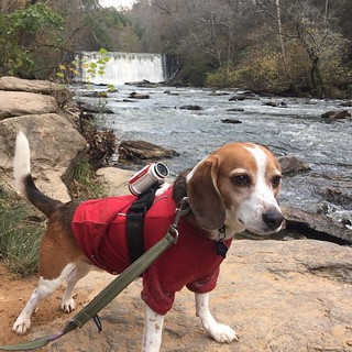 We might have gotten just a little bit silly with the Bandit and the #disapprovingbeagle today... #mybanditadventure #outfam #hiking #atqa #GetOutside #whatisadventure #WhenInRoswell #VisitRoswellGA #exploregeorgia #ThisIsMyGA #beaglelife #beagle #adventu | by valinreallife