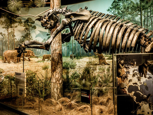 Raleigh Natural Science Museum Jobs
