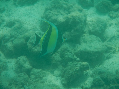Snorkeling at the hotel