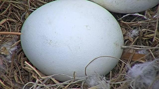 Egg 2, Season 5, 12-4-16