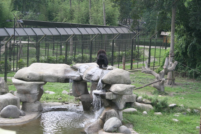 China Bear Rescue Centre 2010