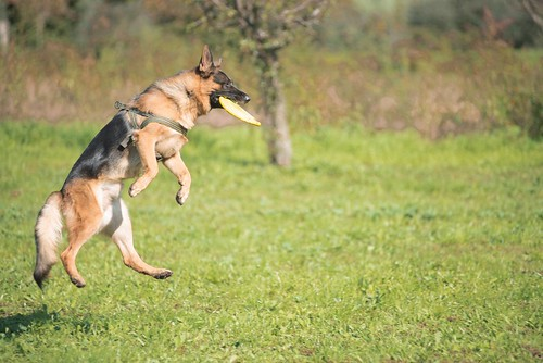 Disc dog mania! | by educamicane