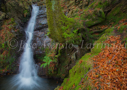 Parque natural de Gorbeia #DePaseoConLarri #Flickr      -2024