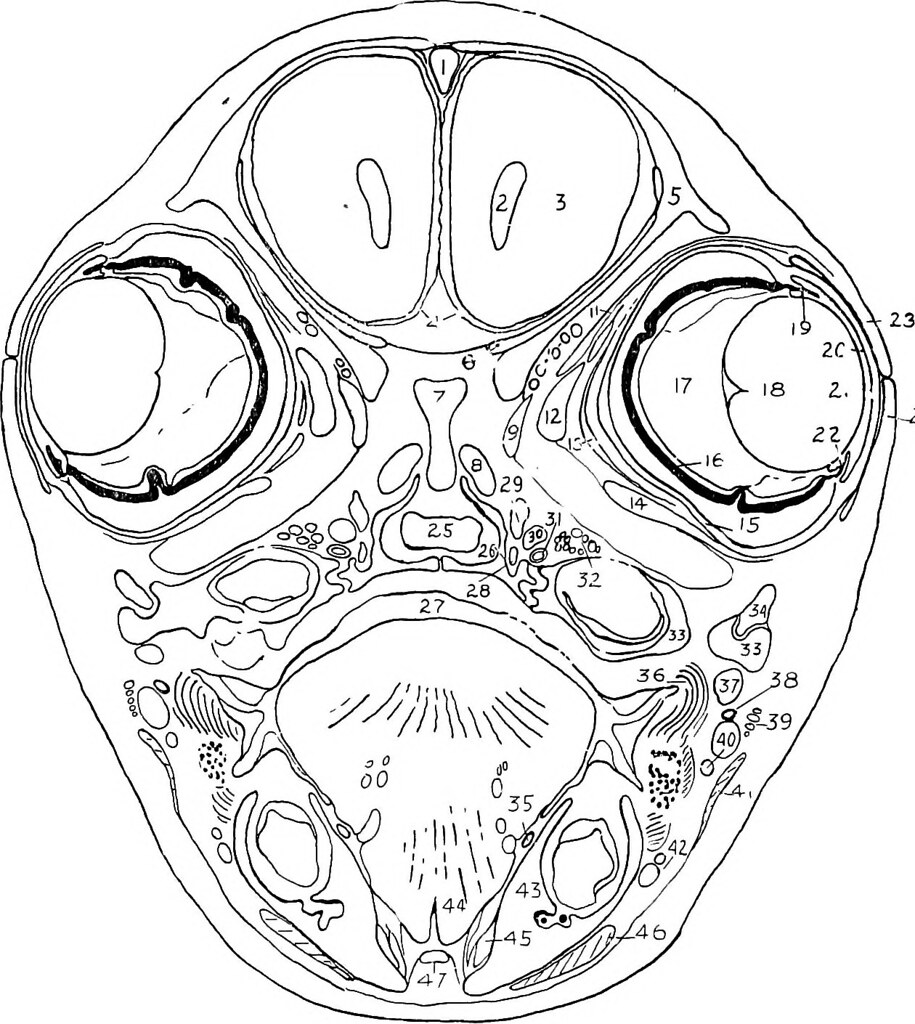 Image From Page 69 Of Practical Anatomy Of The Rabbit An Flickr