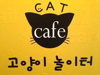 Cat Cafe J Jasinskio G  Vilnius