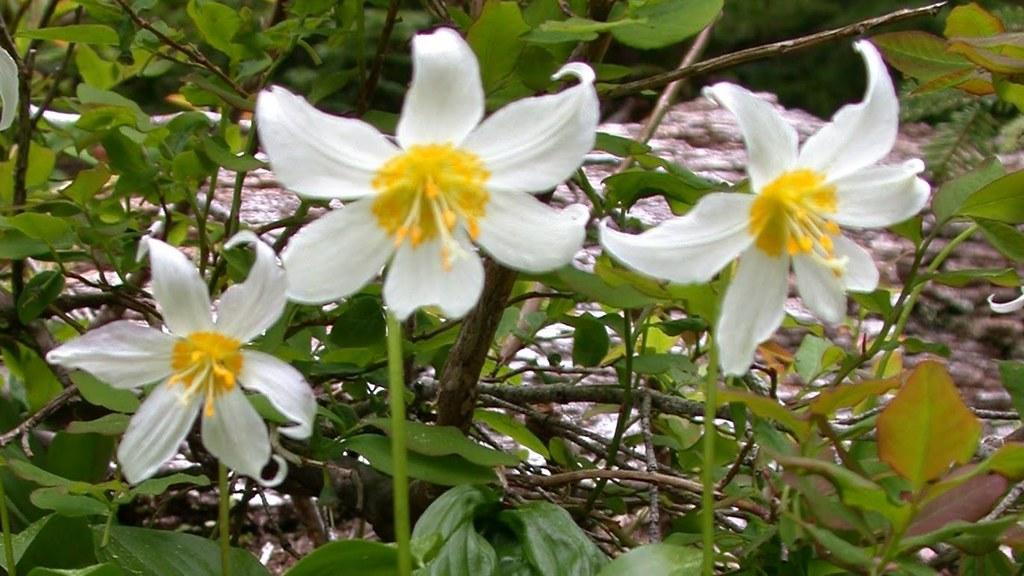 Image result for spring northwest