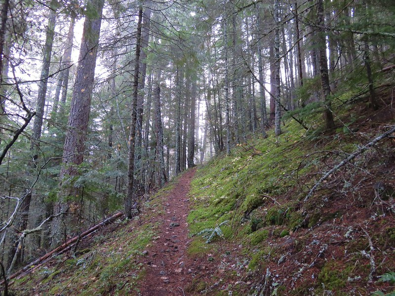 Camas Trail