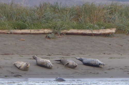 Rat Island Seals Ft Flagler | by Sailing P & G