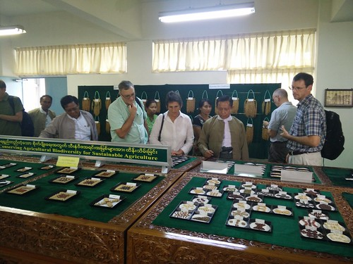 A tour during the Myanmar-CGIAR meeting
