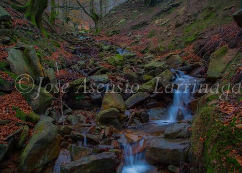 Parque natural de Gorbeia #DePaseoConLarri #Flickr      -2069
