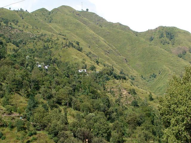उत्तराखण्ड का जंगल