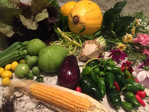 harvest IMG_8805