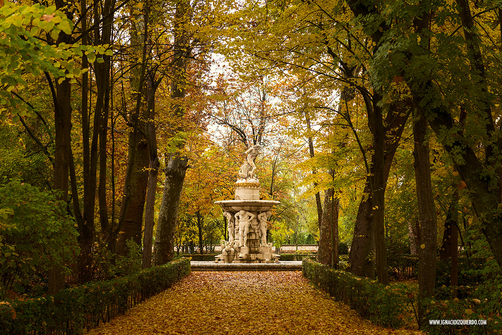 Autumn in Aranjuez 29