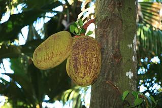 Seychelles - Praslin Seychelles