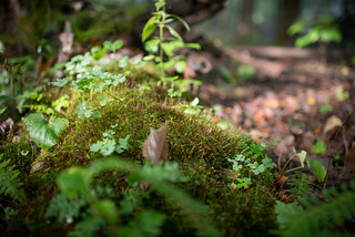 Moss | by goingslowly