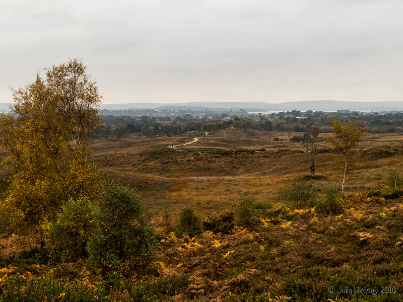 Looking over the heath