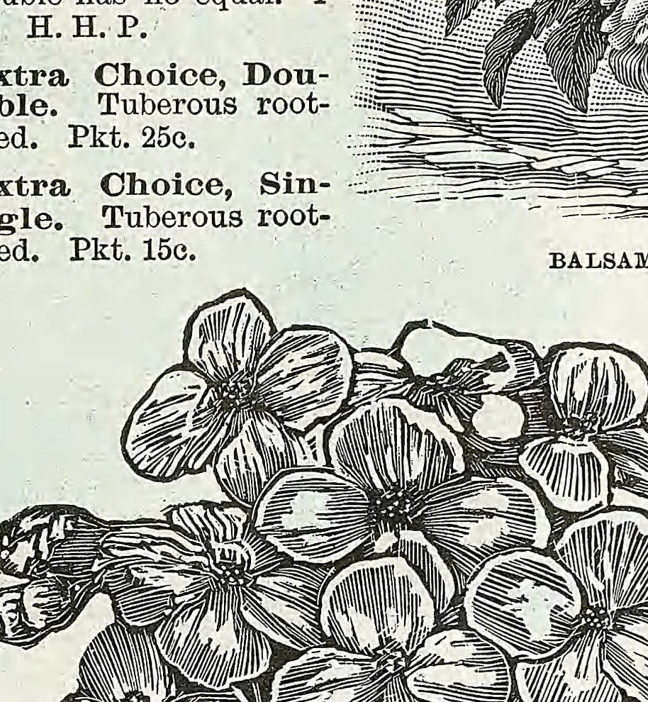Image From Page 42 Of Descriptive Catalogue Of Vegetable Flickr