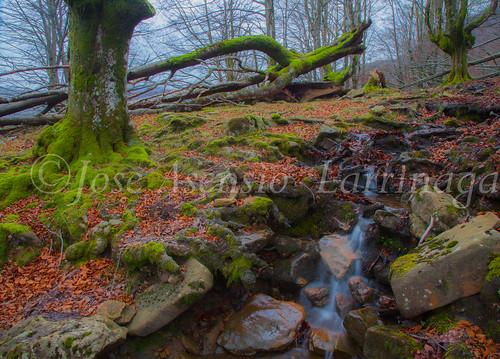 Parque natural de Gorbeia #DePaseoConLarri #Flickr      -2083