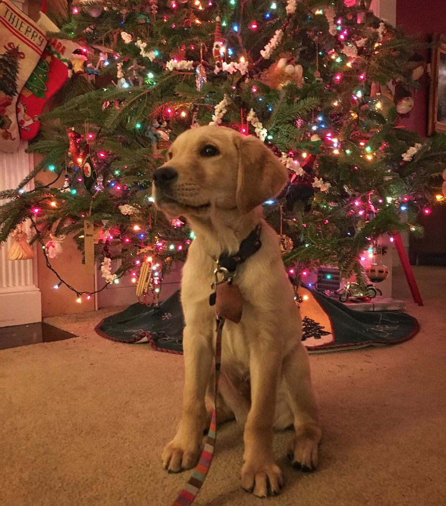Oh christmas tree. Oh adorable puppy. How lovely are your.… | Flickr