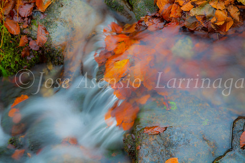 Parque natural de Gorbeia #DePaseoConLarri #Flickr      -2060