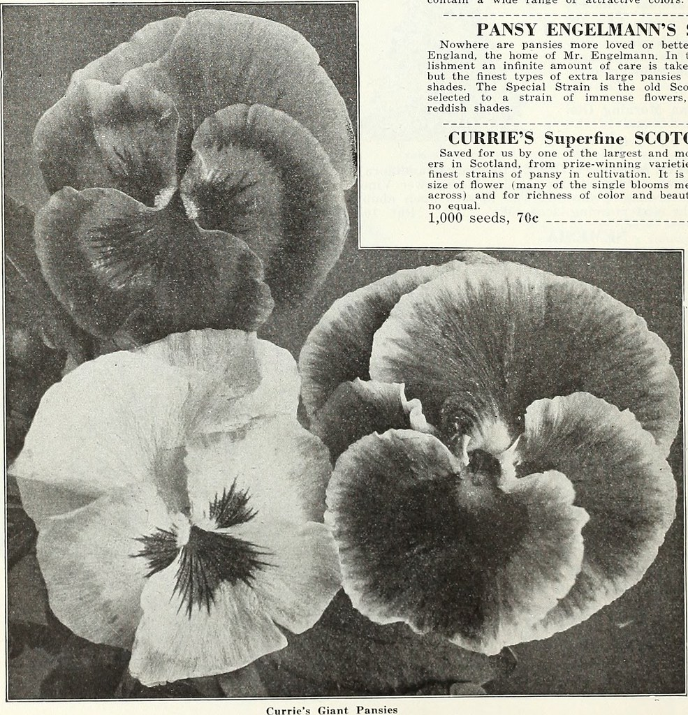 Image from page 33 of curries garden annual spring 19 flickr image from page 33 of curries garden annual spring 1935 60th year izmirmasajfo
