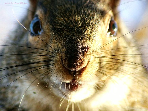 A squirrels nose knows | by furry_gothmother