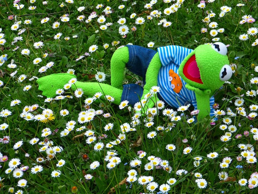 Kermit Relax