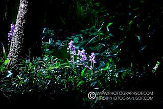 Plants (52 photos)