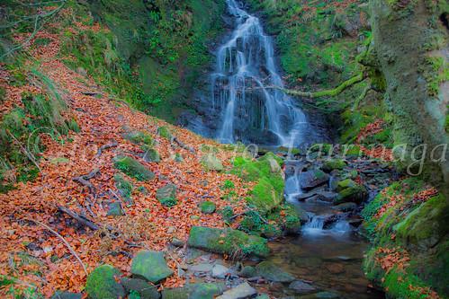 Parque natural de Gorbeia #DePaseoConLarri #Flickr      -2054