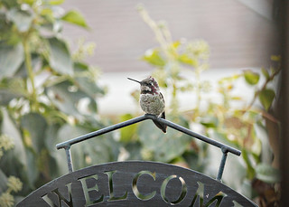 Hummingbird Welcome | by Dawna Kay