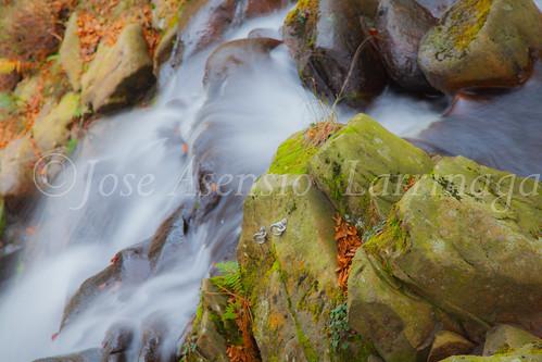 Parque natural de Gorbeia #DePaseoConLarri #Flickr      -2044