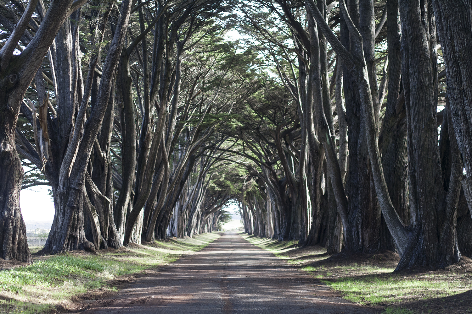 05pointreyes-cypresstreetunnel-trees-travel-style