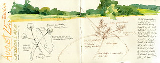 Journal Sketches, plein air | by Cathy (Kate) Johnson