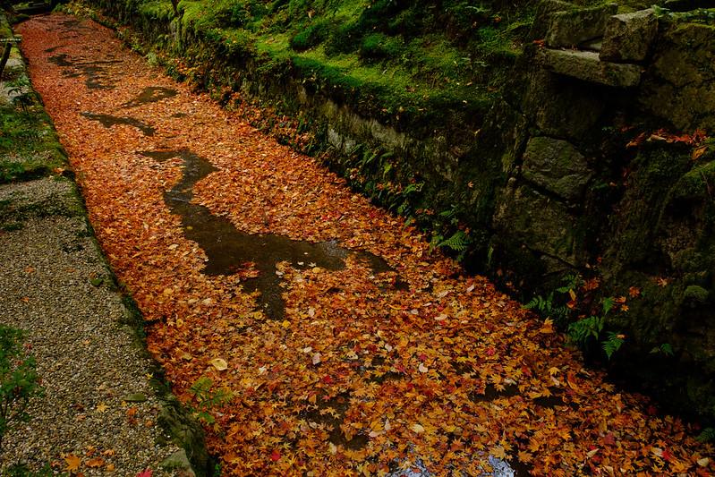 A falling leaf stream