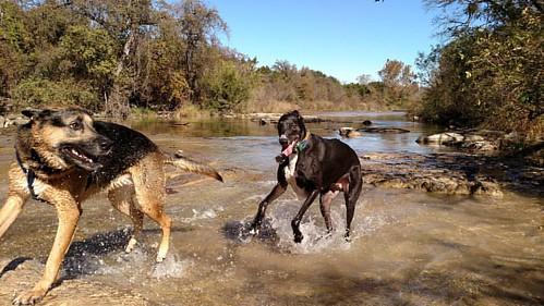 Creek romp action shot!