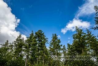 Woodland (32 photos)