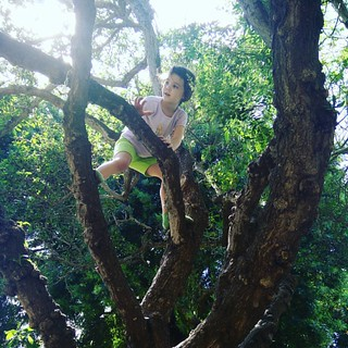 And the tree was happy.   -Shel Silverstein   #climblikeagirl #magicalchildhood #homeschooling | by Urthmama